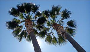 palmeras al sol FIBRAS VEGETALES ecológico sostenible Sostenibilidad