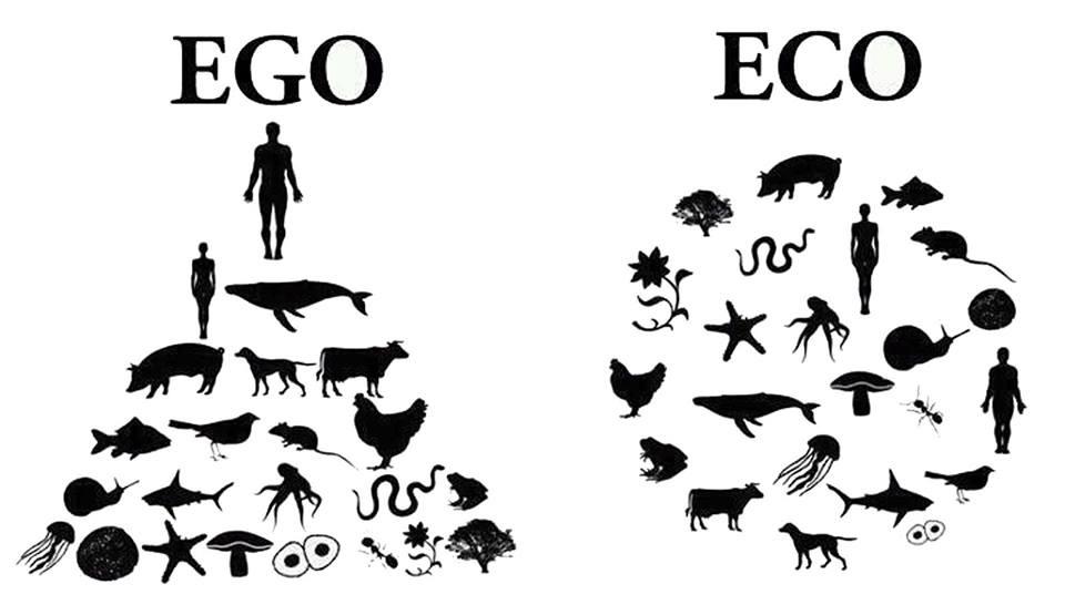 Dónde comprar productos sin plástico - ego VS eco
